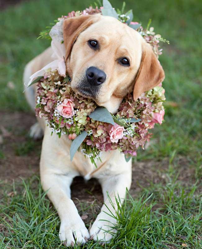 Hond op bruiloft