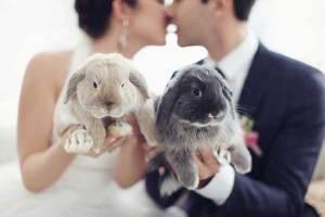 Bruidspaar en hun huisdieren, twee konijntjes