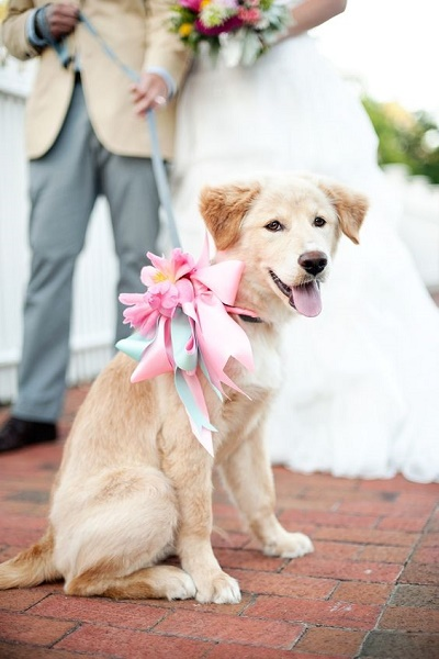 Bruiloft hond