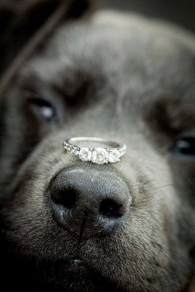 Hond met verlovingsring