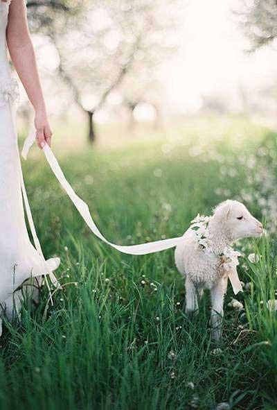 Lammetje bruiloft