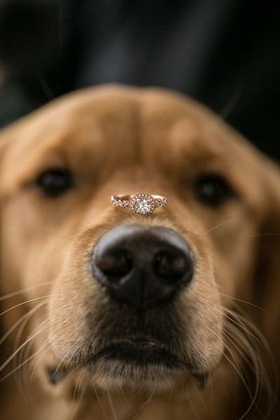 Hond met trouwring op neus