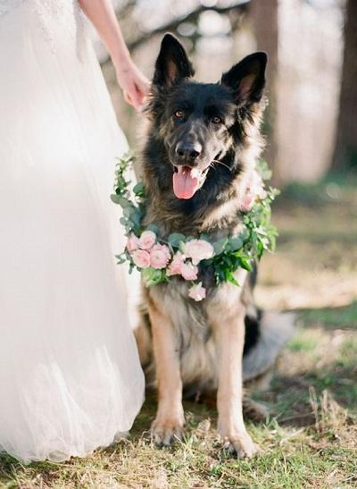 Bruiloft hond met bloemen