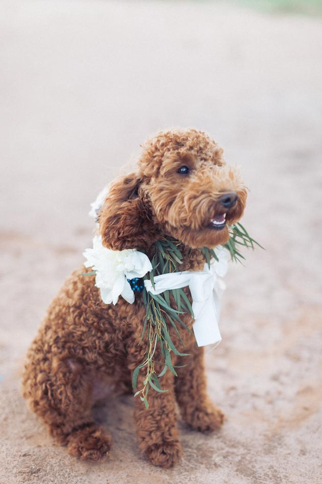 Accessoires voor een hond op een bruiloft