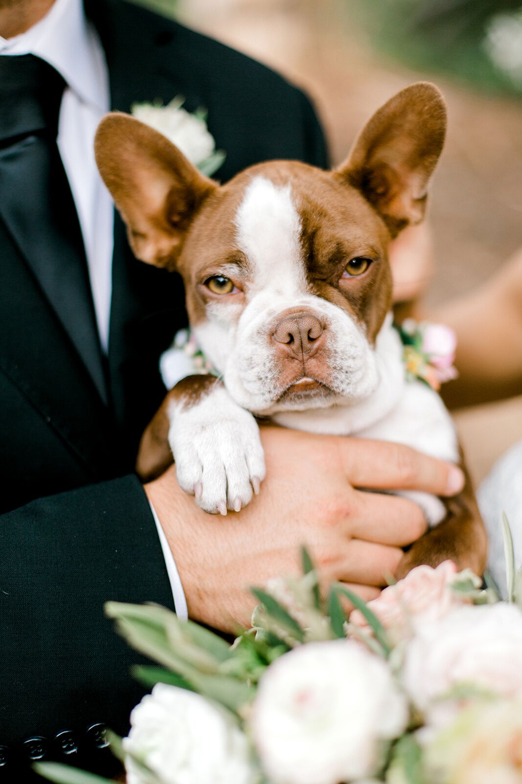 Hond in de armen van de bruidegom