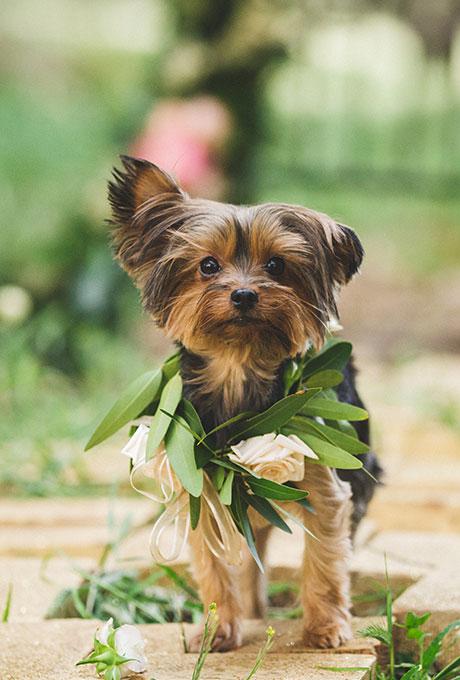 Hondje met bloemen tijdens trouwdag