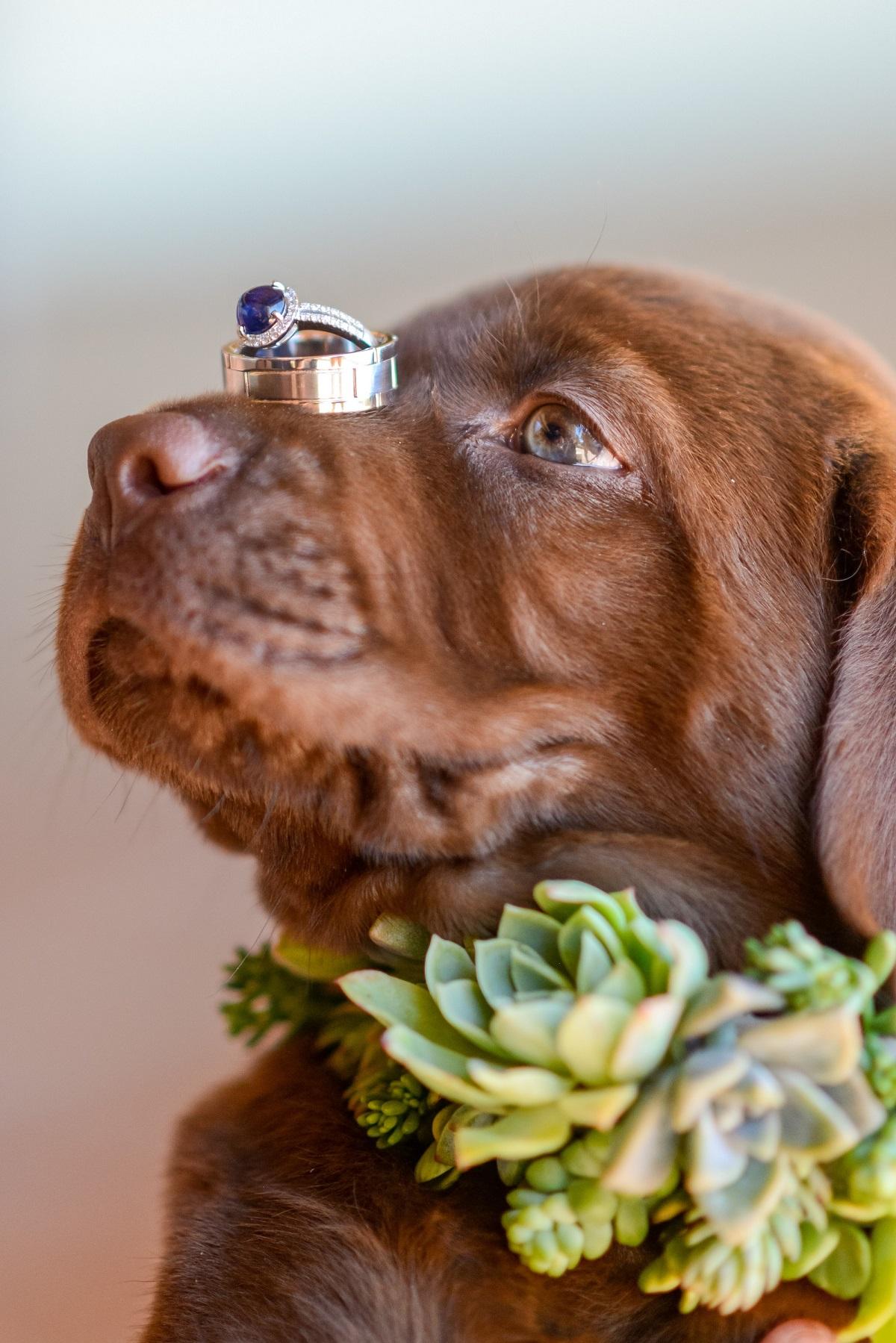 Hond met trouwringen