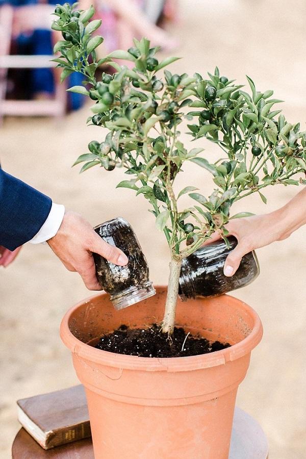 Boom planten tijdens ceremonie