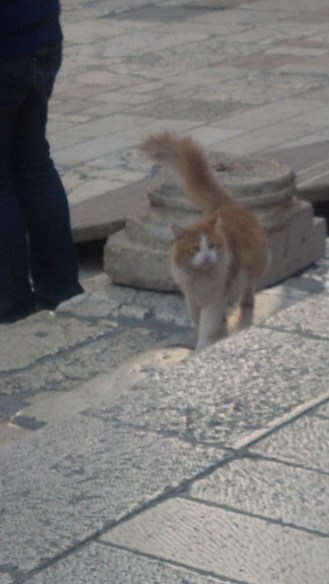 A cat at the Church of the Holy Sepulchre in Jerusalem, Israel.