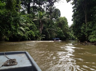 The river on the way to Tortuguero.