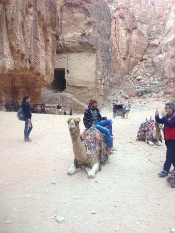 Petra Jordan Camels