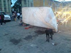 Dia de los Muertos Guanajuato Mexico3 Dogs