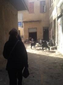Goats in Nazlet al Sammam.