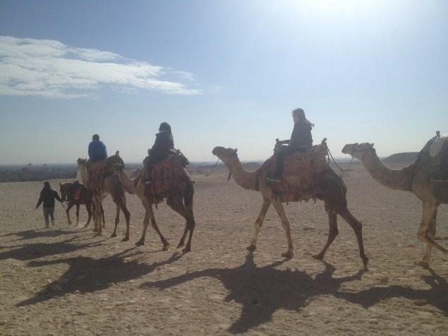 Cairo Egypt Pyramids Camels
