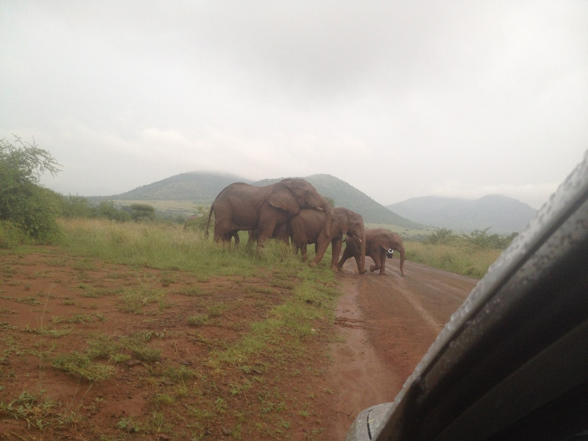Pilanesberg Self-Drive Safari Near Johannesburg, South Africa: Photo Gallery