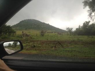 Safari Johannesburg South Africa Pilanesberg Driving in South Africa