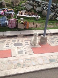 Puno Peru Sillustani Good and Llama