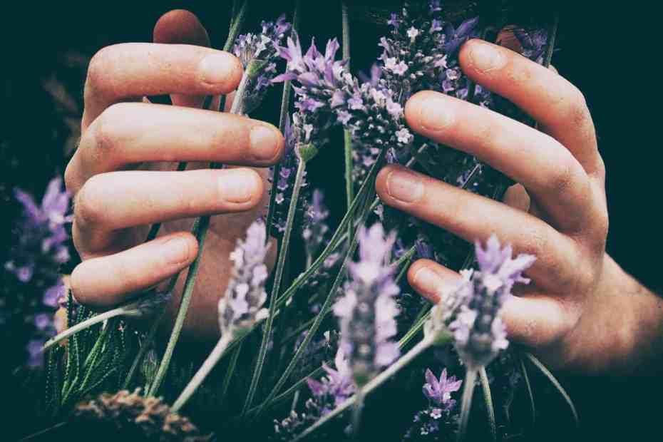 La Rueda del Año. Plantas con flores de color morado.