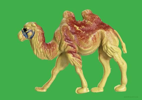 Plastic Fantastic: Camel