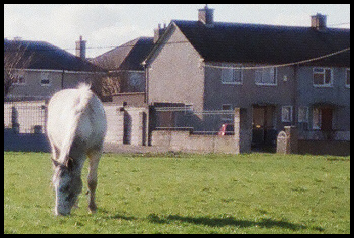 kon pasacy sie na trawniku, oczywiscie Finglas, fragment ze skanu pelnej rozdzielczosci 3088x2048 / horse grazing in lawn, Finglas, Dublin, it's a piece from 3088x2048 scan