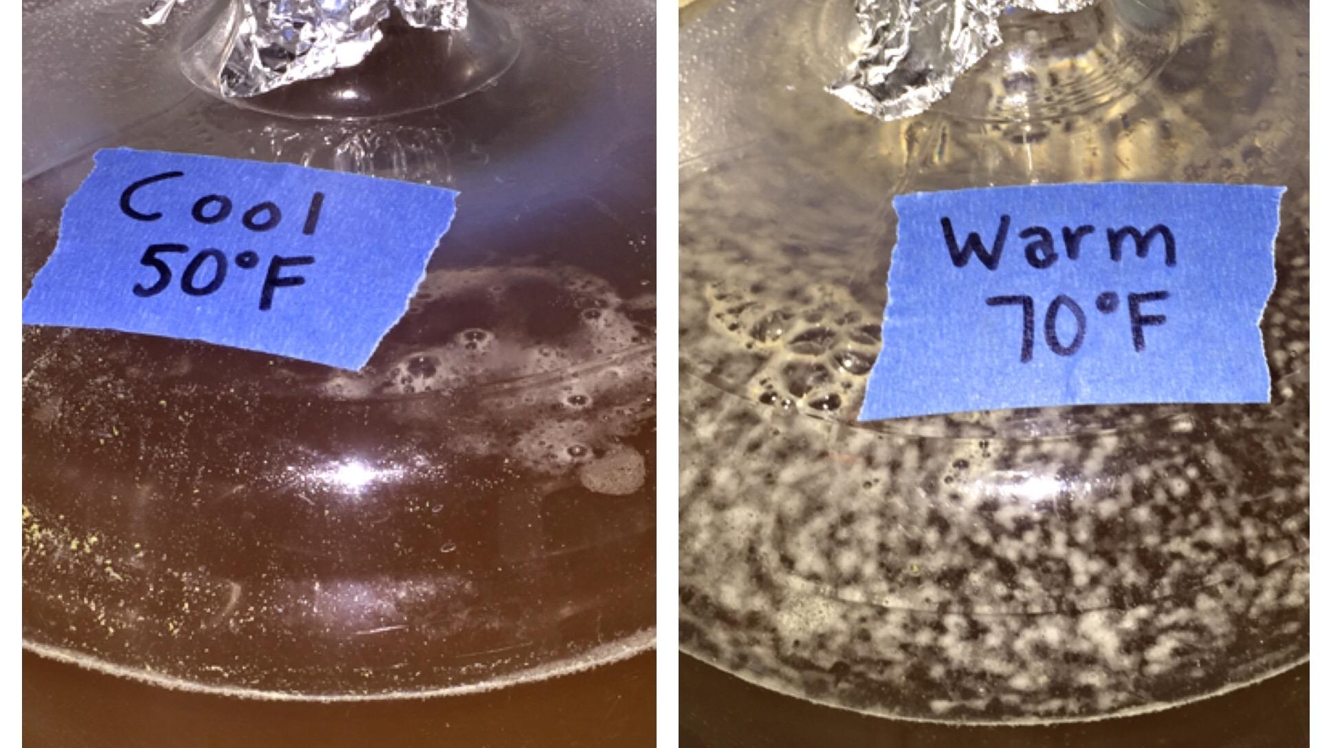 Fermentation Temperature Pt 4 Fermentis Saflager W 34 70