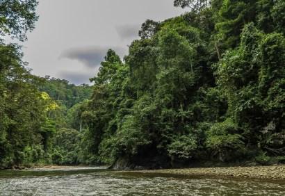 Temburong River Brunei image