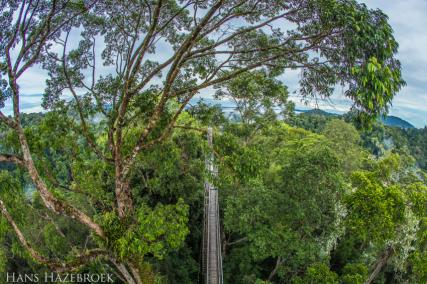 Temburong National Park