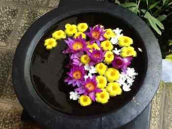 fiori all'interno di una ciotola