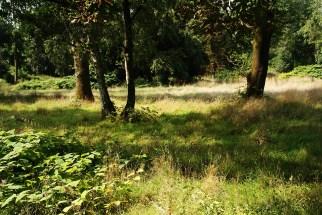 Alter Segeroth Friedhof / Essen City-Nord