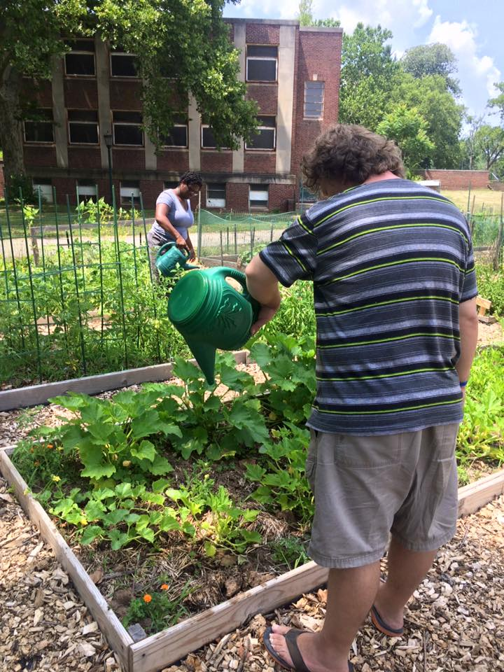 Veggies grown at Norristown Community Garden