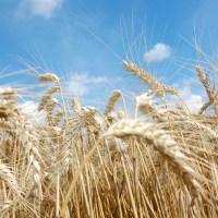 EU agriculture: new crops' market observatory