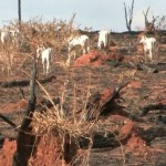 Cowspiracy-vorschau