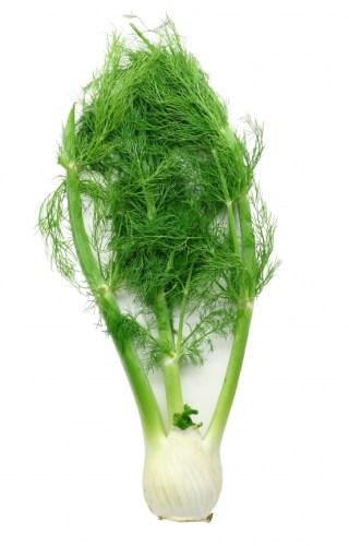 fennel1