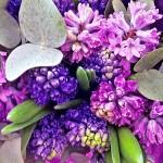 ヒヤシンスで春の香り