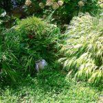 ブッシュ状態の庭と虫刺され