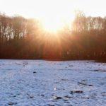寒い日のお散歩