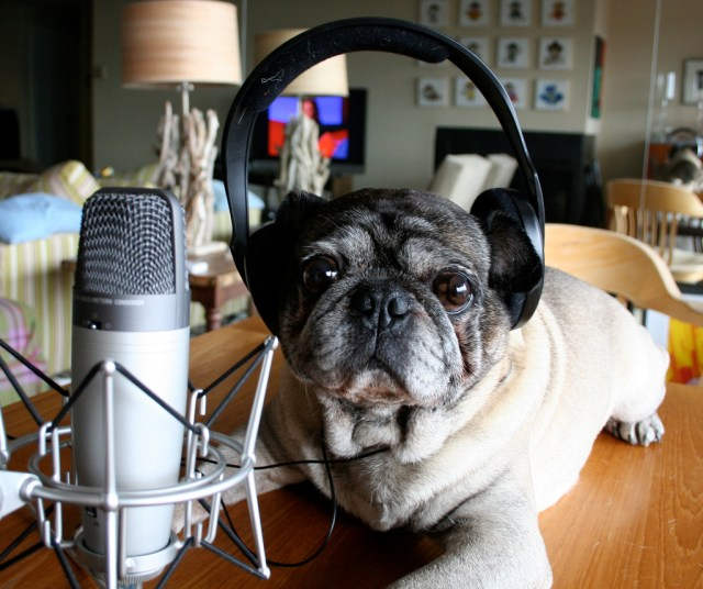 podcast dog Zoomar
