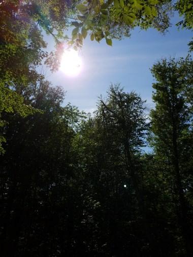 sun over dark forest