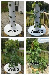 aeroponic Tower Gardens 3