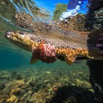 Bryan Gregson_Underwater-35