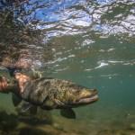 Bryan Gregson_Underwater-36