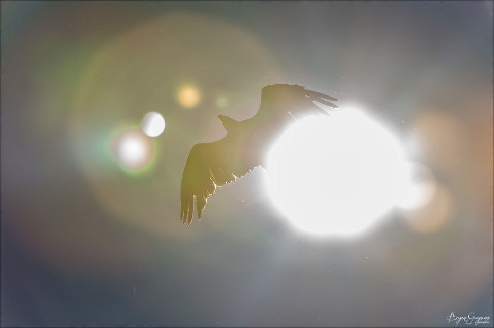Eagle-sun_GP_4059