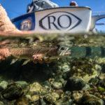 gregson_underwater-102