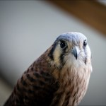 Montana-Raptor-Conservation-Center_Bryan-Gregson_GP_9054