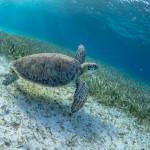 Bryan Gregson_Underwater-103