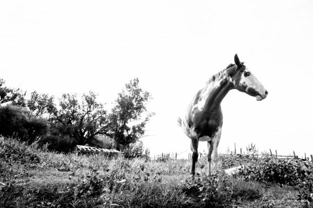 Gregson_Bryan_Paint Horse-1