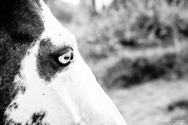 Gregson_Bryan_Paint Horse-5
