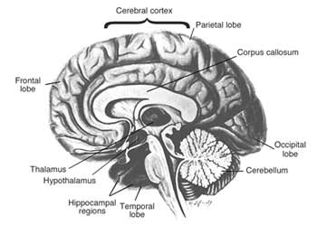 Health and Fitness » Common Neurological Symptoms