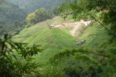 Coffee fields in the Sierra Nevada de Santa Marta Mountains.