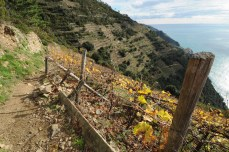 Vineyard in the Cinque Terre